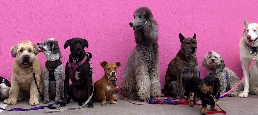 dogs and a pink wall types of data scientists